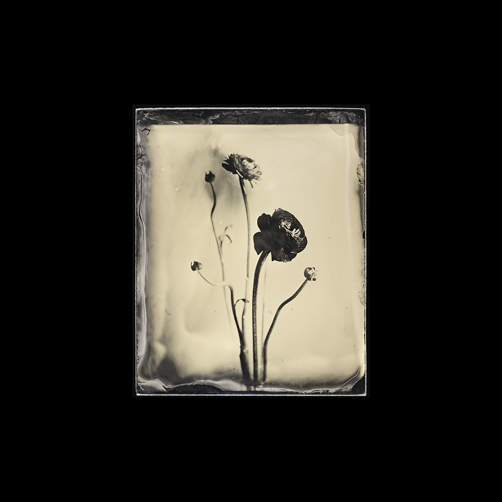 wet plate collodion still lifes